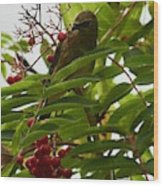 Berries And Waxwing Wood Print