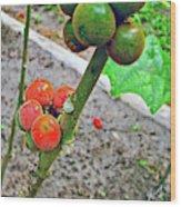 Berries In Shaman's Garden In Amazon Jungle, Peru Wood Print