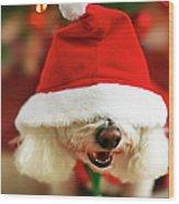 Bichon Frise Dog In Santa Hat At Wood Print