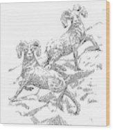 Bighorns Wood Print