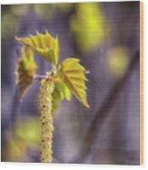 Birch Blooms Wood Print