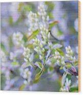 Bird Cherry Wood Print