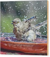Bird In A Bath Wood Print