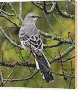 Mockingbird In Tree Wood Print