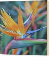 Bird Of Paradise Flowers Wood Print