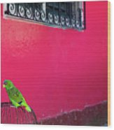 Bird On Cage Wood Print