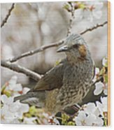 Bird Perched Among Cherry Blossoms Wood Print