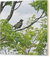 Bird Resting On Branch Wood Print
