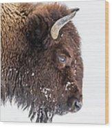 Bison In Winter Wood Print