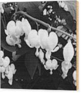 Black And White Bleeding Heart Wood Print