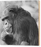 Black And White Chimp Wood Print