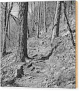Black And White Mountain Trail Wood Print