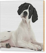 Black-and-white Pointer Pup Wood Print