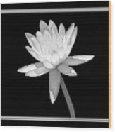 Black And White Water Lily Wood Print