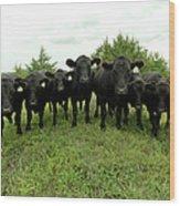 Black Angus Cows Wood Print