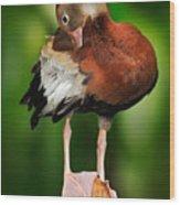 Black-bellied Whistling-duck Wood Print