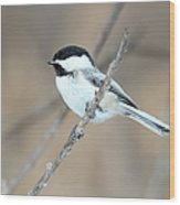 Black-capped Chickadee In Spring Wood Print