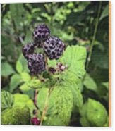 Black Raspberries  Wood Print