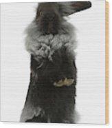 Black Rough Rabbit Wood Print