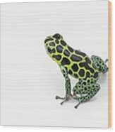Black Spotted Green Poison Dart Frog Wood Print