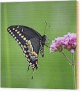 Black Swallowtail Balance Wood Print