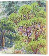 Blake Garden, Berkeley Ca Wood Print