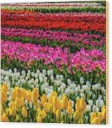 Blazing Tulips Wood Print
