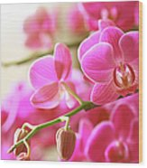 Blooming Pink Orchid On A Green Branch Wood Print