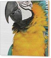 Blue And Yellow Macaw, Ara Ararauna Wood Print
