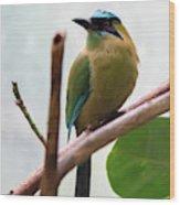 Blue-crowned Motmot Wood Print