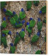 Blue-headed And Barrabands Parrots Wood Print