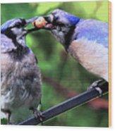 Blue Jays Wooing 2 Wood Print