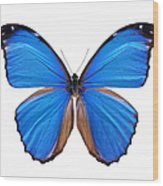 Blue Morpho Butterfly - Large Wood Print