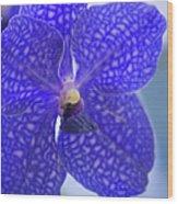 Blue Vanda Orchid Flower Close-up Wood Print