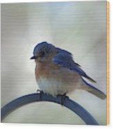 Bluebird Fluff Wood Print