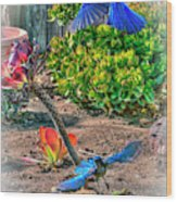 Bluejays Landing San Pedro Wood Print