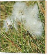 Bog Cotton On The Moor Wood Print