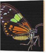 Boisduval's Tiger Moth Wood Print