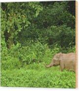 Borneo Pygmy Elephant Calf In Rainforest Wood Print