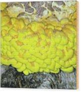Bracket Fungus (laetiporus Sulphureus) Wood Print