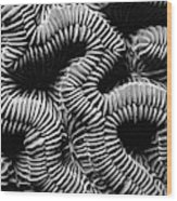 Brain Coral In Macro Bw Wood Print