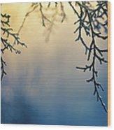 Branch Of Pine Tree Wood Print