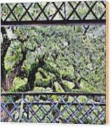 Bridge Through Live Oaks Wood Print