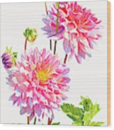 Bright Pink Dahlias With Buds Wood Print