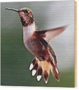 Broad Tailed Hummingbird Wood Print
