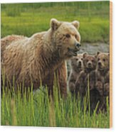 Brown Bear Sow And Cubs, In The Long Wood Print