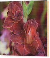 Brown Jewel 5. The Beauty Of Gladiolus Wood Print
