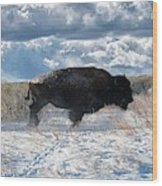 Buffalo Charge.  Bison Running, Ground Shaking When They Trampled Through Arsenal Wildlife Refuge Wood Print