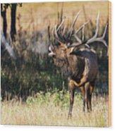 Bull Elk 3068 Wood Print