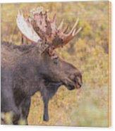 Bull Moose In Fall Colors Wood Print